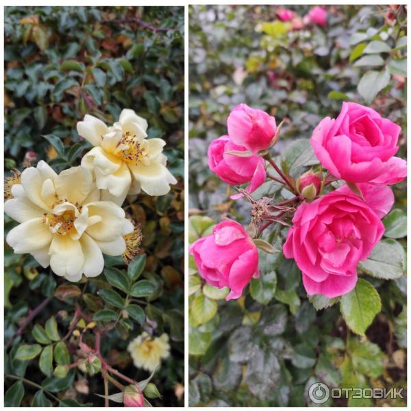 Цветение в середине ноября